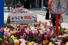 明石の花壇【2018年4月】