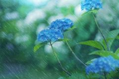 円照寺の紫陽花【2018年6月】
