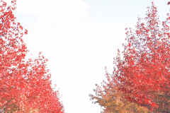 秋の遊歩道(加西市)【2019年11月】