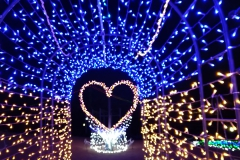 大蔵海岸ハートフルイルミネーション2020【2020年12月】