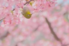 春の鳥【2020年3月】