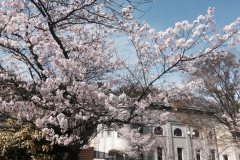 桜 ~神戸市水の科学館~